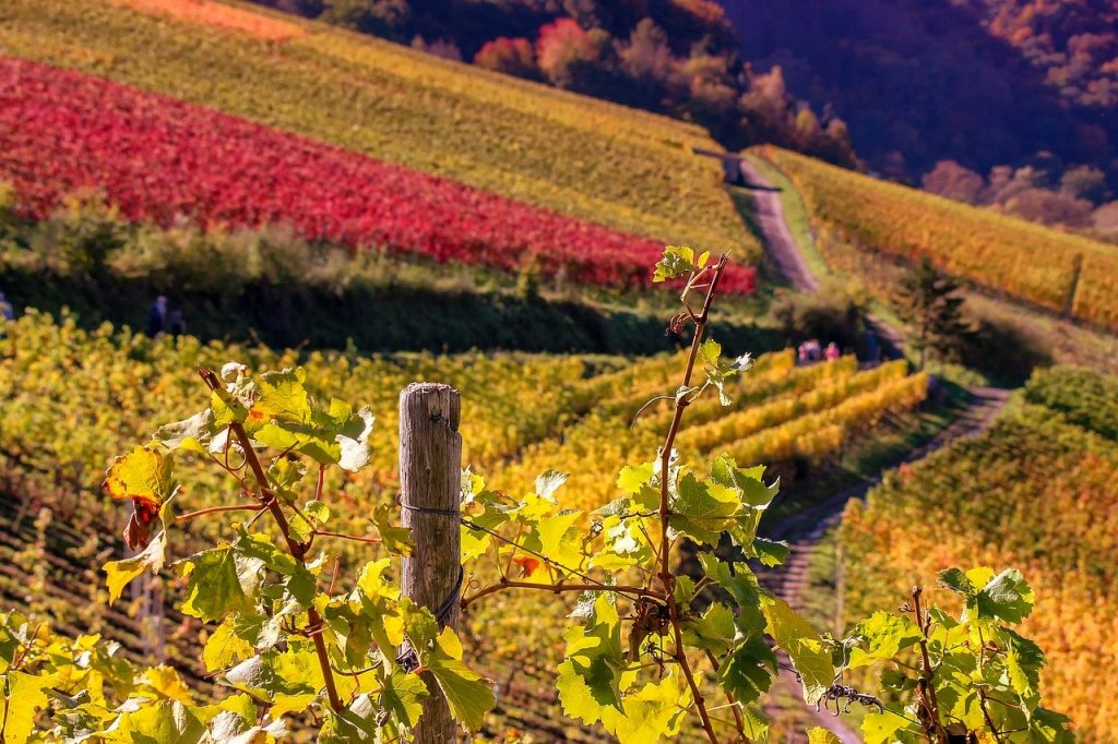 Weingut in Nonnenhorn